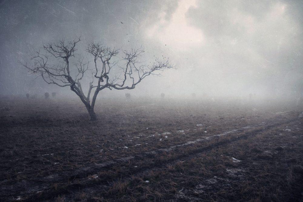 Photographer Julia Starr - Night Fate