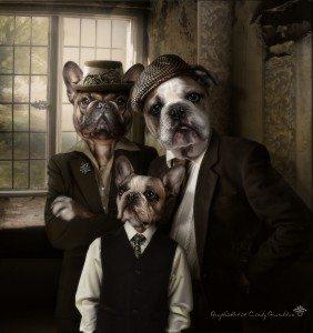 swines photo