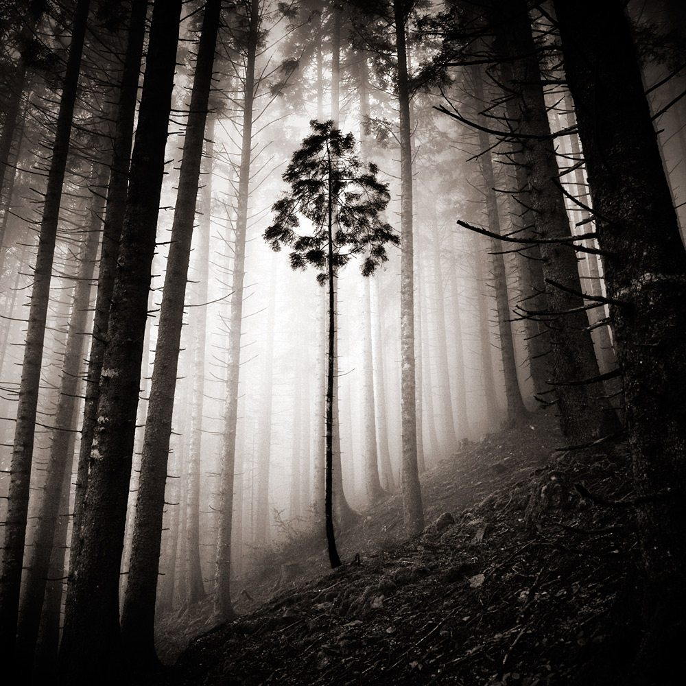 Photographer Ebru Sidar